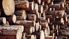 Žaliavinė mediena